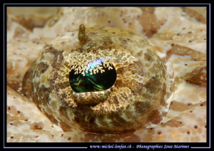 The details of the eye of a Crocodile fish.... by Michel Lonfat 
